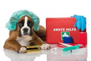Hunde-Op Versicherung Vergleich