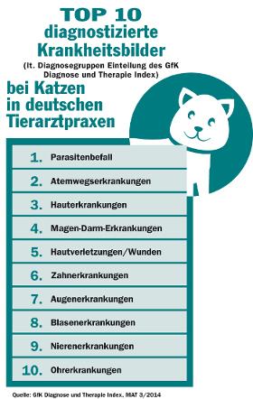 Die häufigsten Katzenkrankheiten