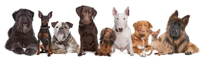 Hundeversicherung Testsieger Stiftung Warentest