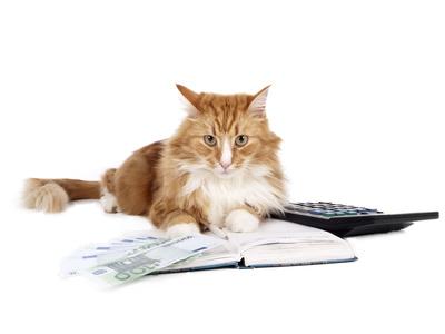 Katzenversicherung Stiftung Warentest